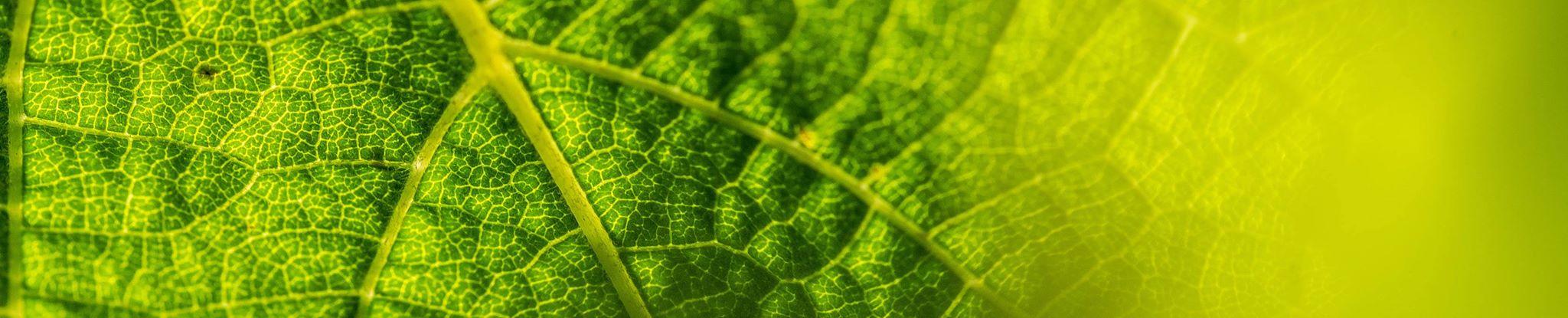 Vins Bio d'Alsace - Domaine De l'Envol