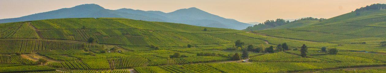Vins d'Alsace – Domaine De l'Envol